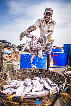 Fisherman working in Negombo fish market (Lellama), Sri Lanka, Asia