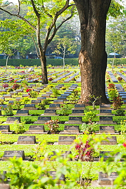 Lines of thousands of graves among trees at Kanchanaburi War Cemetery, Thailand, Southeast Asia, Asia