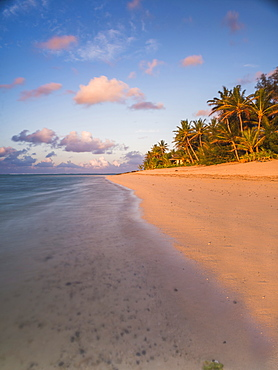 Tropical beach with palm trees at sunrise, Rarotonga, Cook Islands, South Pacific, Pacific