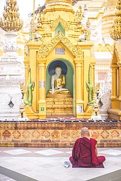 Buddhist monk praying at Shwedagon Pagoda (Shwedagon Zedi Daw) (Golden Pagoda), Yangon (Rangoon), Myanmar (Burma), Asia