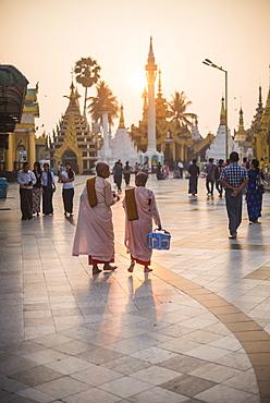 Buddhist nuns in pink robes at sunrise at Shwedagon Pagoda (Golden Pagoda), Yangon (Rangoon), Myanmar (Burma), Asia - 1109-2380