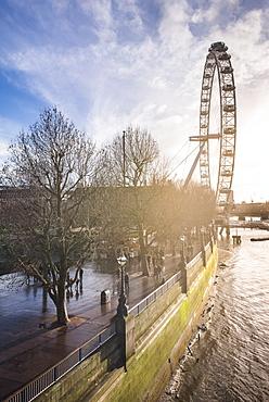 London Eye (Millennium Wheel) at sunset, London Borough of Lambeth, England, United Kingdom, Europe