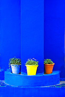 Potted plants and bright blue paintwork, Majorelle Gardens (Gardens of Yves Saint-Laurent), Marrakech, Morocco, North Africa, Africa