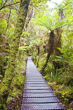Forest walkway surrounding Lake Matheson, Westland National Park, UNESCO World Heritage Site, South Island, New Zealand, Pacific