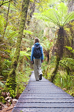 Lake Matheson, tourist on the walkway in the forest, Westland National Park, South Island, New Zealand