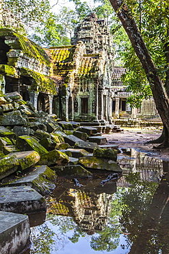 Reflections at Ta Prohm Temple (Rajavihara), Angkor, UNESCO World Heritage Site, Siem Reap Province, Cambodia, Indochina, Southeast Asia, Asia