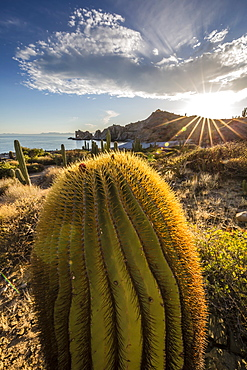 Sunset on an endemic giant barrel cactus (Ferocactus diguetii) on Isla Santa Catalina, Baja California Sur, Mexico, North America