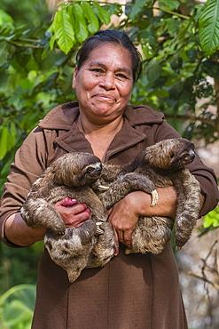 A woman with her pet brown-throated sloths (Bradypus variegatus), San Francisco Village, Loreto, Peru, South America