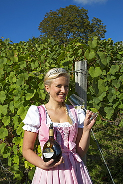 Wine princess Christina Schuhmann in front of the vineyard of Weingut Dahms winery, Sennfeld, near Schweinfurt, Franconia, Bavaria, Germany