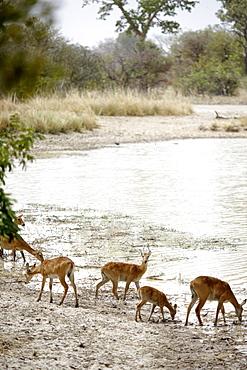 Antelopes at Mar Diwouini water hole, Penjari National Park, Benin