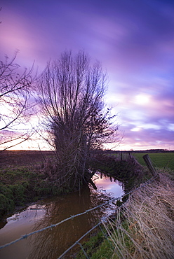 Willow trees along a creek in the evening sun, Long Exposure, Rhade, Dorsten, North Rhine Westphalia, Germany