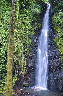 man bathing in a natural pool under a waterfall in the jungle, Dark View Falls, St. Vincent, Saint Vincent and the Grenadines, Lesser Antilles, West Indies, Windward Islands, Antilles, Caribbean, Central America