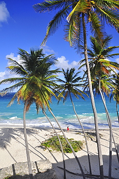 young woman on a tropical beach with palm trees, sea, Bottom Bay, south coast, Barbados, Lesser Antilles, West Indies, Windward Islands, Antilles, Caribbean, Central America