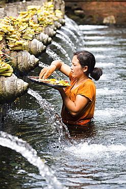 Balinese woman giving offering, spring sanctuary Pura Tirta Empul, Tampaksiring, Bali, Indonesia