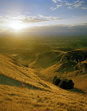 Joggers on a country road on Te Mata Peak at sunset, Hawke`s Bay, North Island, New Zealand