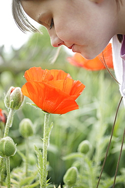 Young girl looking down at poppy