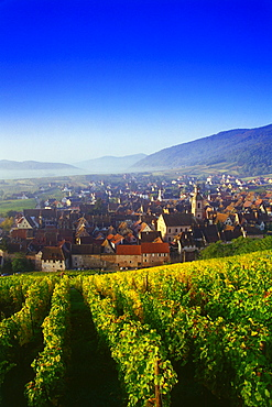 View from the Vineyards over Riquewihr,Elsass,France