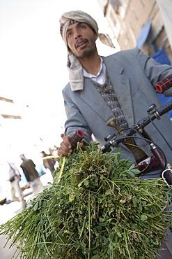 Man Selling Qat Leaves, Sana'a, Yemen