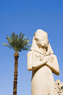 Date Palm & Giant Statue at Karnak Temple,Luxor, Egypt