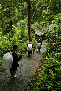 path and stairs, porters, mountains, Emei Shan, World Heritage Site, UNESCO, China, Asia