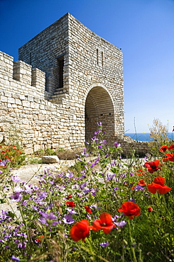 Flowers and castle in the sunlight, Cape Kaliakra, Black Sea, Bulgaria, Europe