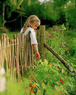 Girl (5 years) catching over a fence for flowers, Nakenstorf, Mecklenburg-Western Pomerania, Germany, MR