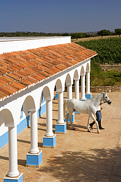 A man leads a white horse from the stables at a farm in Alentejo, in Portugal