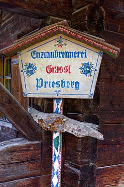 Enzianstechen at the Priesberghütte, Berchtesgadener Land, Upper Bavaria, Bavaria, Germany