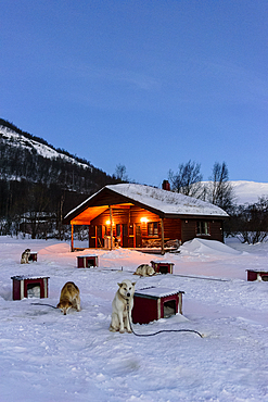 Sled dog in front of his hut, Björn Klauer's husky farm, Bardufoss, Norway