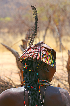 Angola; western part of the province of Cunene; Woman from the ethnic group of the Mucohona; rear view of the head; eye-catching hairstyle with pearls, shells and a long feather; in addition finely incorporated colored sticks, made from tin cans