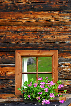 flower decorated window at farmhouse, Oetztal range, South Tyrol, Italy