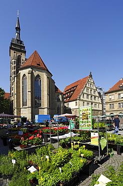 Flower market at Schiller Square, collegiate church in background, Stuttgart, Baden-Wurttemberg, Germany