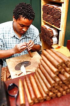 A man rolling cigars, Calle Ocho, Miami, Florida, USA