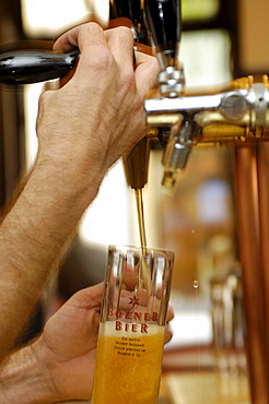A glass of beer beneath the tap, brewery Hopfen & Co., Bozen, South Tyrol, Italy, Europe