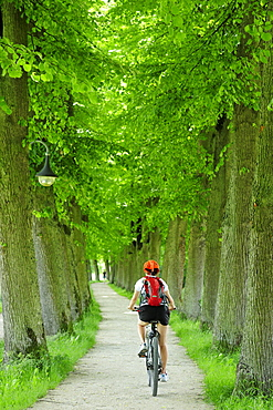 Female cyclist passing lime tree alley, Altmuehltal cycle trail, Altmuehltal natural park, Altmuehltal, Bavaria, Germany