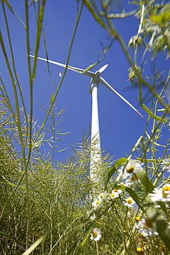 Wind turbine, Dithmarschen, Schleswig-Holstein, Germany