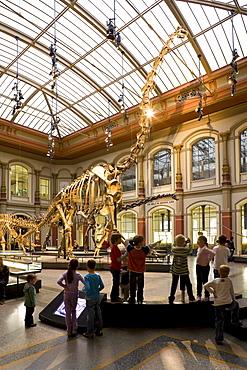 Skeletons of dinosaurs at Berlin Museum of Natural History, Invalidenstrasse, Berlin-Mitte, Berlin, Germany, Europe