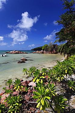 Sandy beach, Baie Ste Anne, Praslin, Seychelles, Indian Ocean