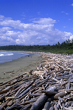 Driftwood on the beach at Wickanimish Bay, Pacific Rim National Park, Vancouver Island, British Columbia, Canada, America