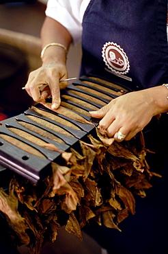 Leon Jimenes making cigars in the cigar factory in Santiago de los Caballeros, Dominican Republic