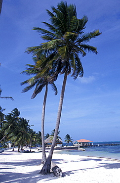 Palm Beach, Hotel beach, San Pedro, Ambergris Caye, Belize, Caribbean Sea, Carribean, America