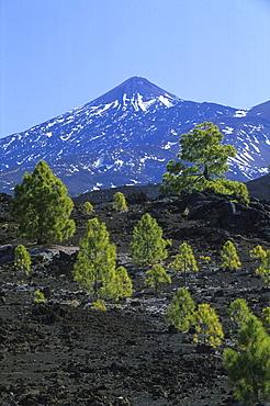 Mountain top of Teide, Pico del Teide, 3718m from Pinar de Chio, Tenerife, Canary Islands, Spain