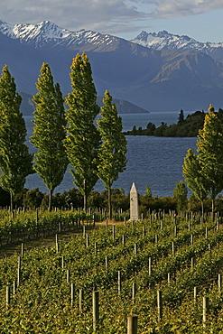 Rippon Vineyards on shores of Lake Wanaka, Otago, South Island, New Zealand, Oceania
