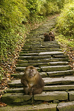 path and stairs, thieving monkeys, Mountains, Emei Shan, World Heritage Site, UNESCO, China, Asia