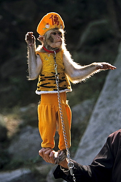 performing monkey, Tai Shan, Shandong province, Taishan, Mount Tai, World Heritage, UNESCO, China, Asia