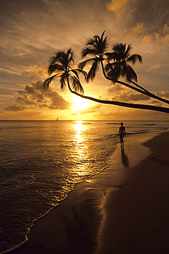 Coconut Trees Sunset Silhouette, Turtle Beach, Near Mullins Bay, St. Peter, Barbados, Carribean
