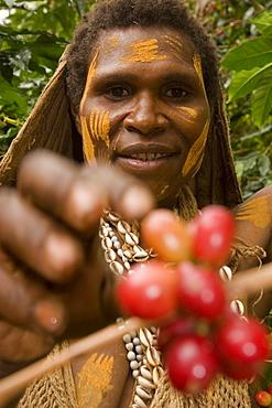 Women picks coffee bean, Coffee plantation, Langila, Highlands, Papua New Guinea, Oceania