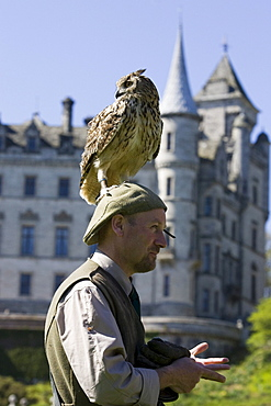 A Bengal Eagle Owl at Dunrobin Castle sitting on the head of a man, Falconer, Scotland, Great Britain