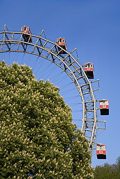 Vienna Austria Prater Big Wheel in spring blooming chestnut trees