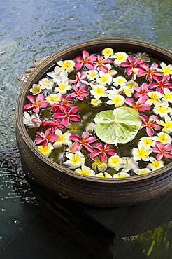 Flower blossoms in water, Flower decoration in Hotel Shanti Ananda Resort und Spa, Mauritius